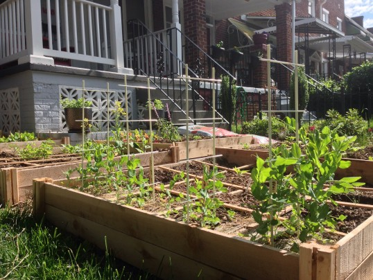 Urban gardening: Are raised beds enough when lead is present?