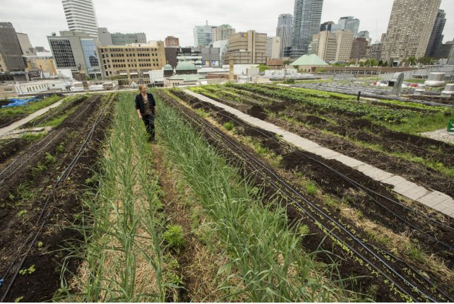 Why growing vegetables on the roof is the future of Toronto architecture