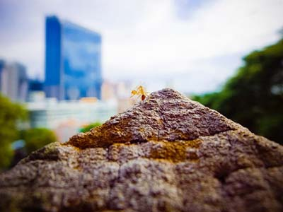 How ants could influence urban planning