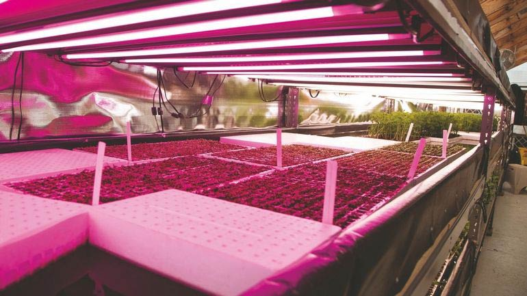 Aquaponics once seemed like a hobby could be the future for growing food in New York City