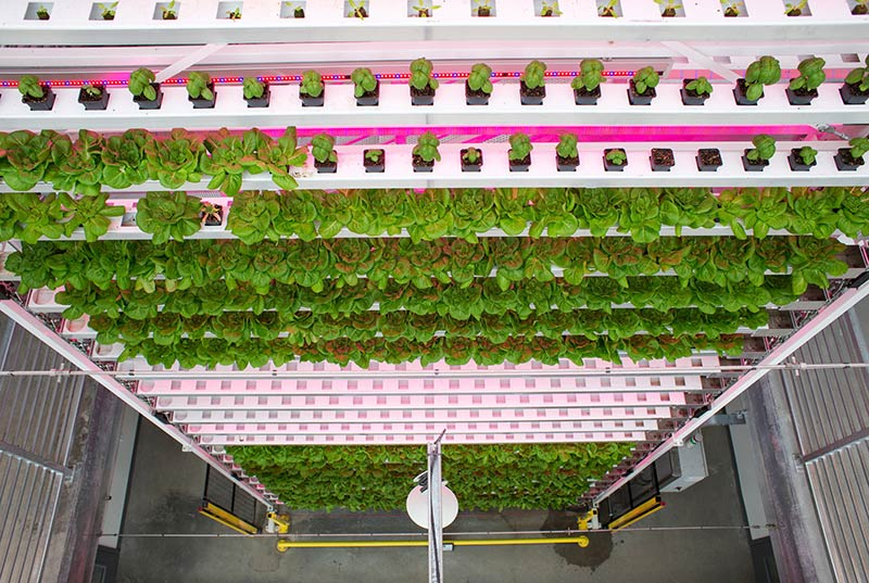 A Wyoming Ski Town Greenhouse Takes Local Produce to Another Level