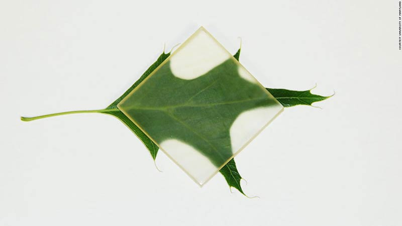 The new green, see-through wood could revolutionize design concepts