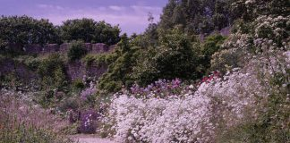 Great Gardens: Trematon Castle