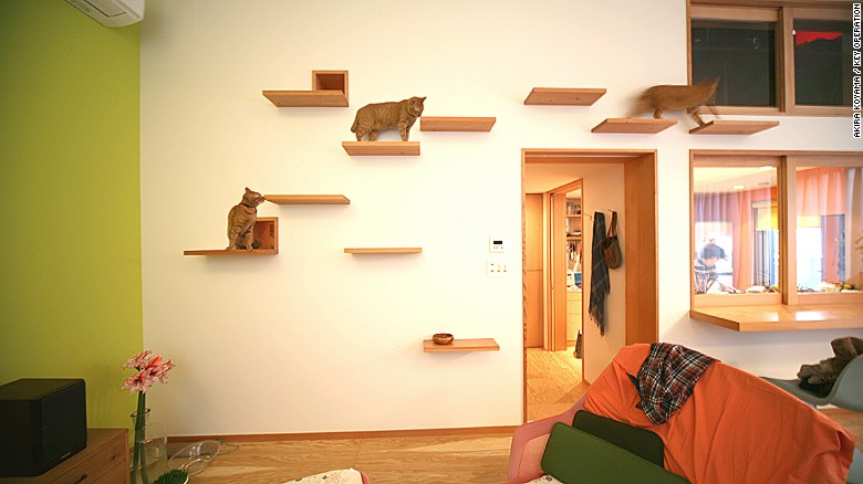Cat flats: designing human apartments for feline friends