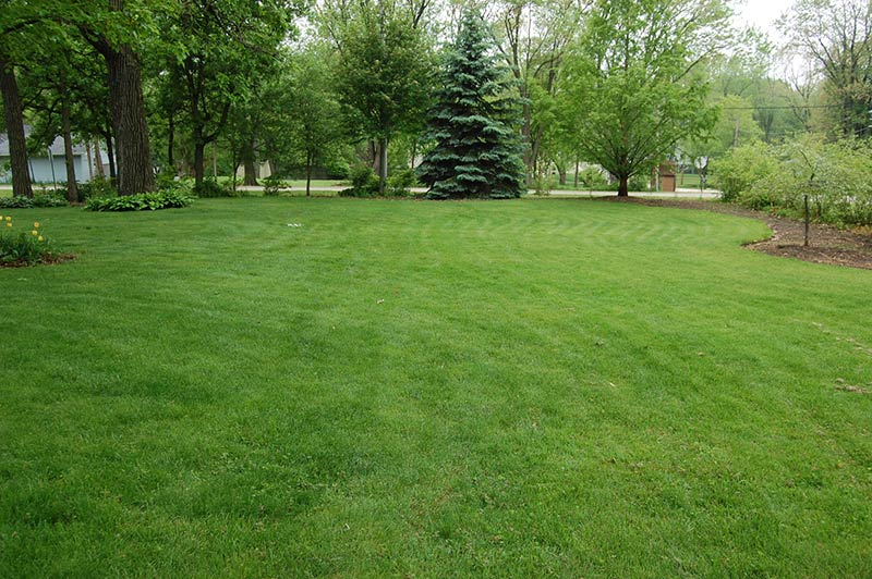 Strategies For Transitioning To Organic Lawn Management