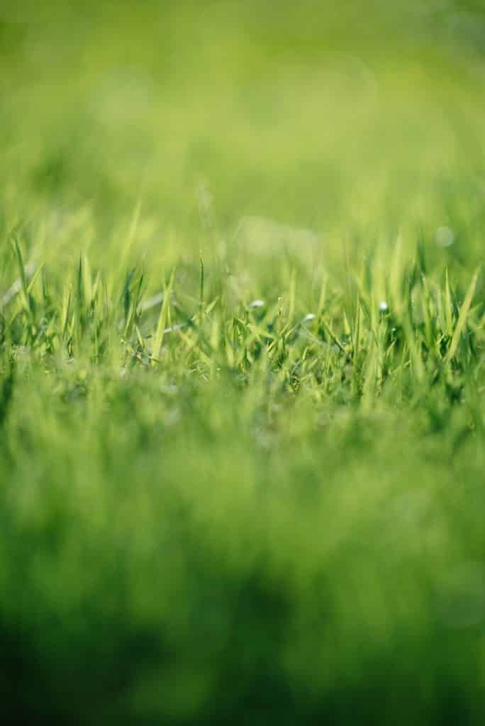 Improving your lawn how to