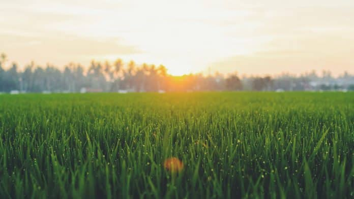 keeping your lawn and how to improve it