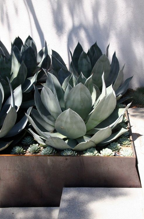 Xeriscaping inspiration designs