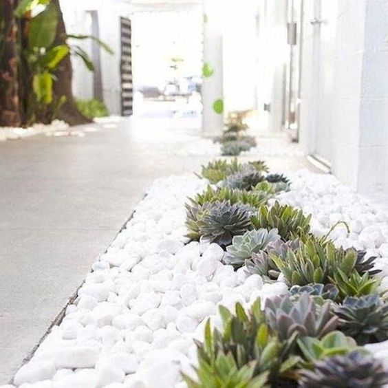 Xeriscaping inspiration
