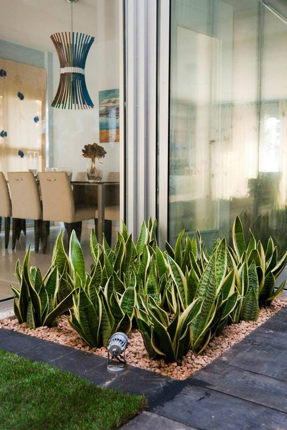 Xeriscaping inspirations