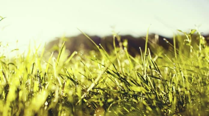 Remedies for Heat-Burnt Grass for a Refreshing Summer Lawn