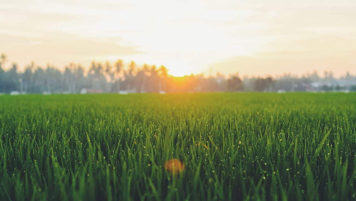 8 remedies for heat burnt grass for a refreshing summer lawn 6