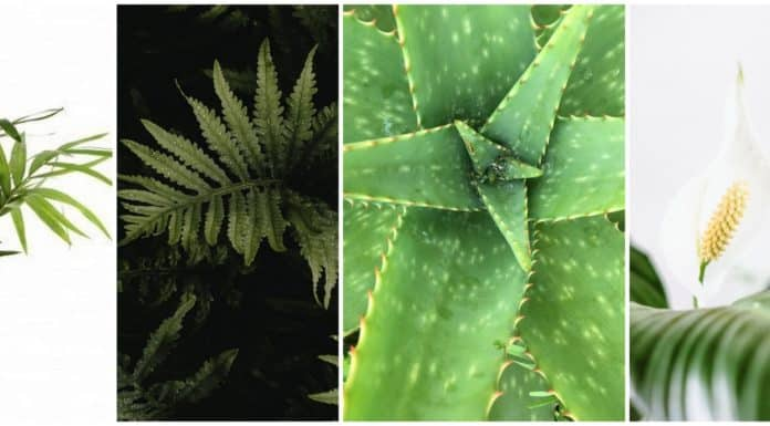 Air-Purifying Plants for a Healthy Home