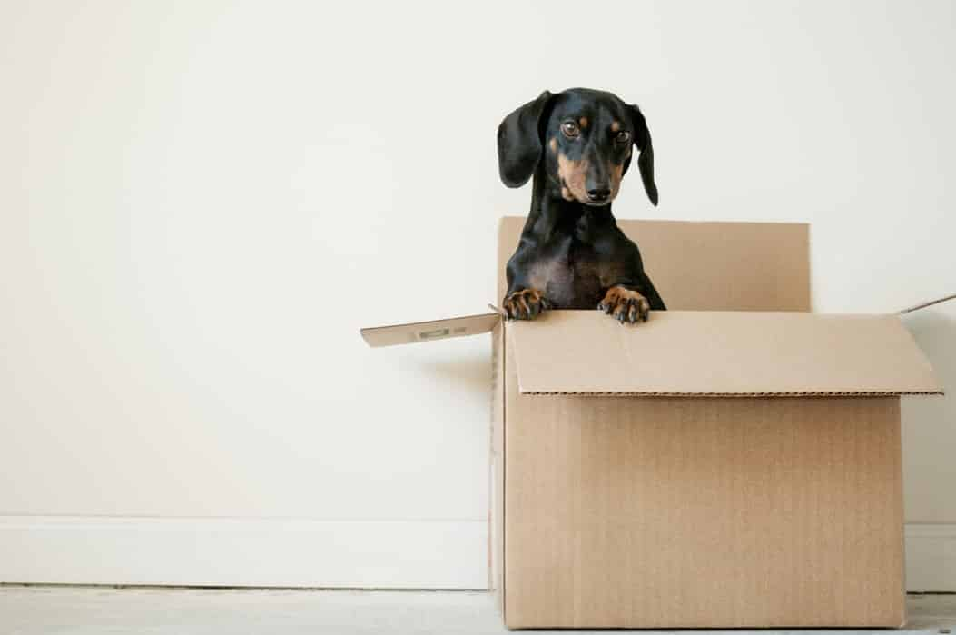 How to pack fragile items for moving 2
