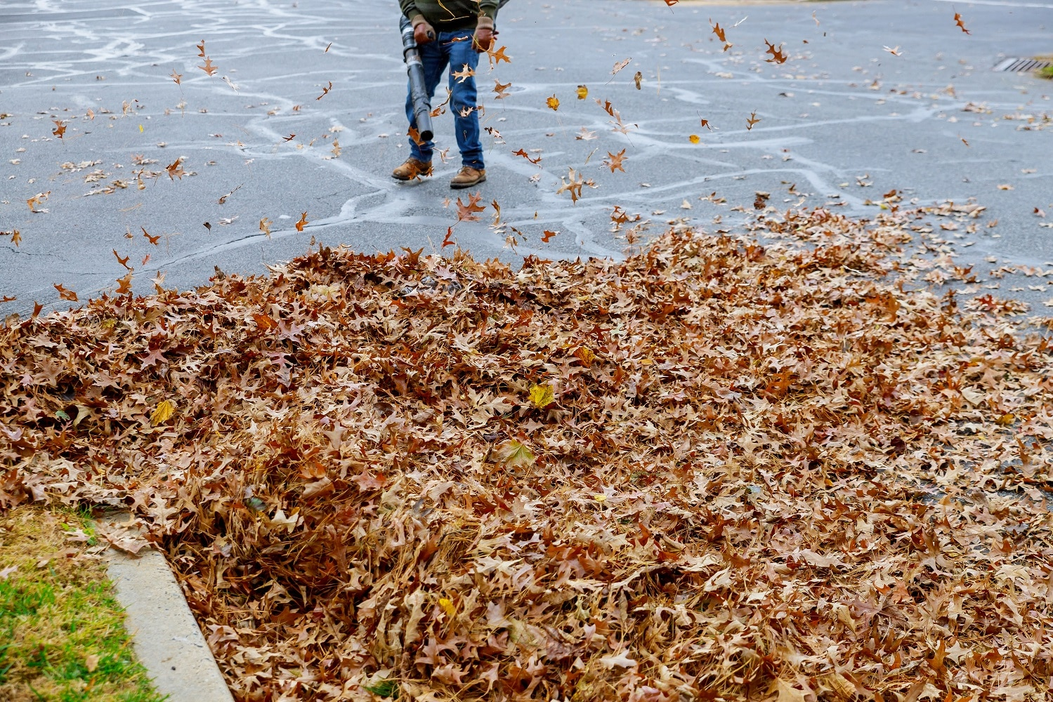Man working with best leaf blower: the leaves are up and down on a sunny day
