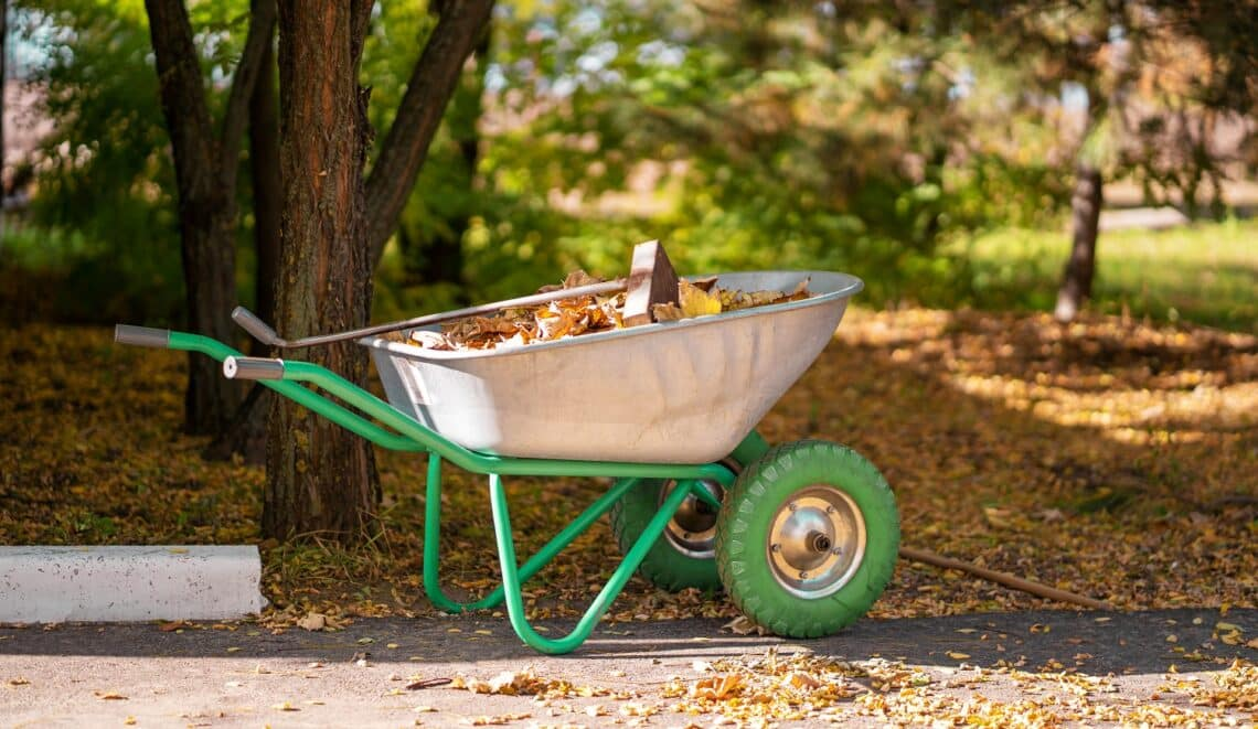 A metal wheelbarrow for a gardener who collects fallen yellow leaves into it in a park.