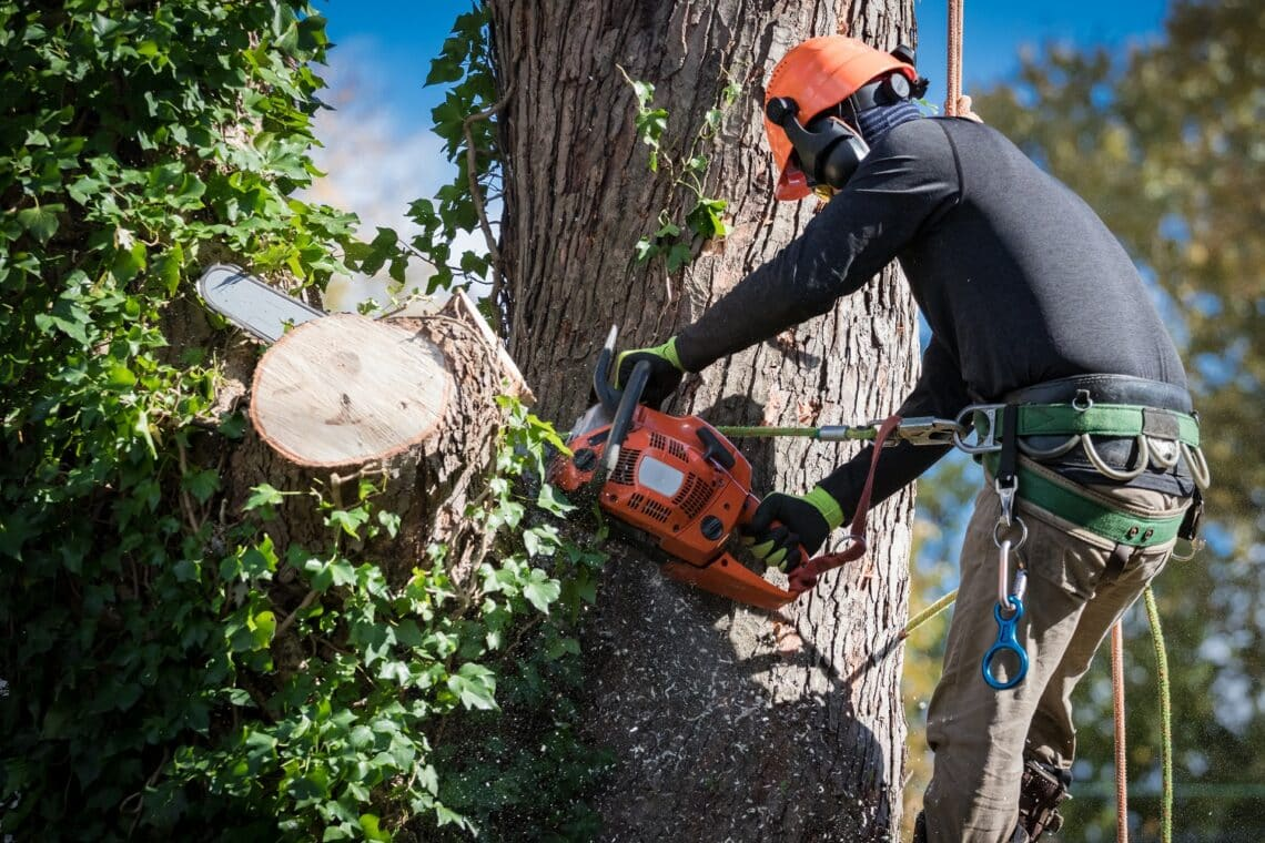 Tree removal tips how to do it safely 1
