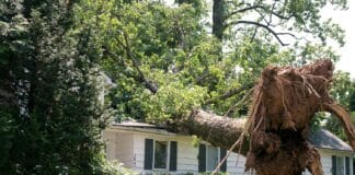 Tree Removal Tips How To Do It Safely