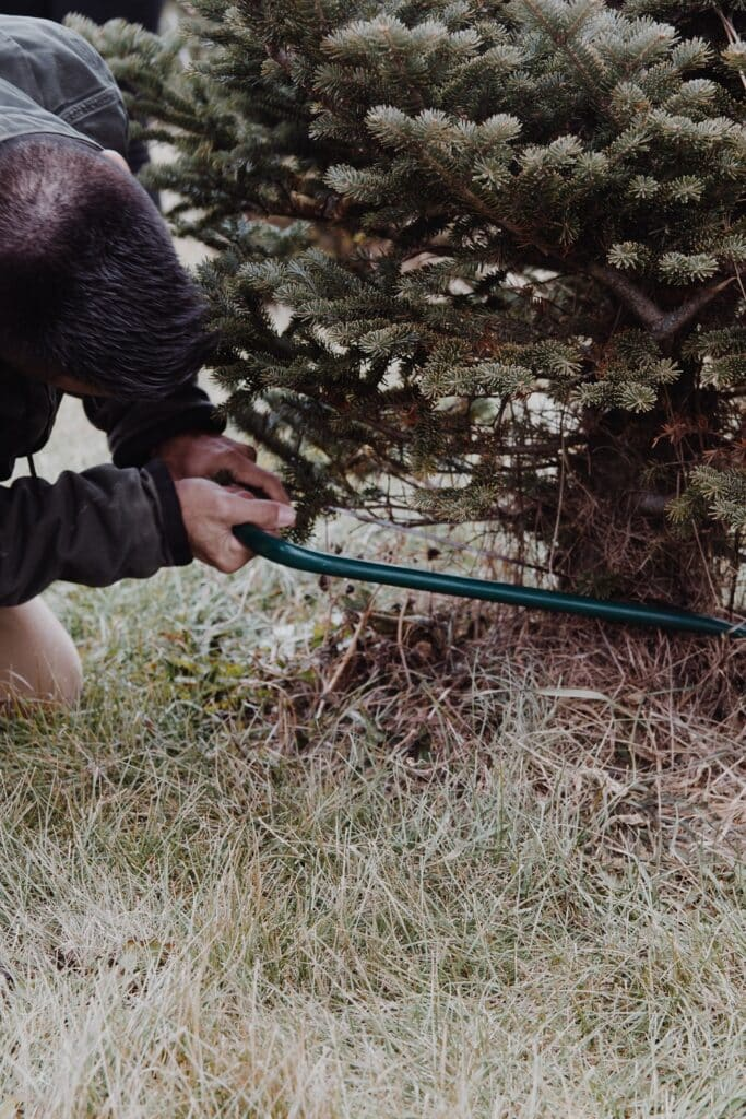 Tree removal tips how to do it safely 2