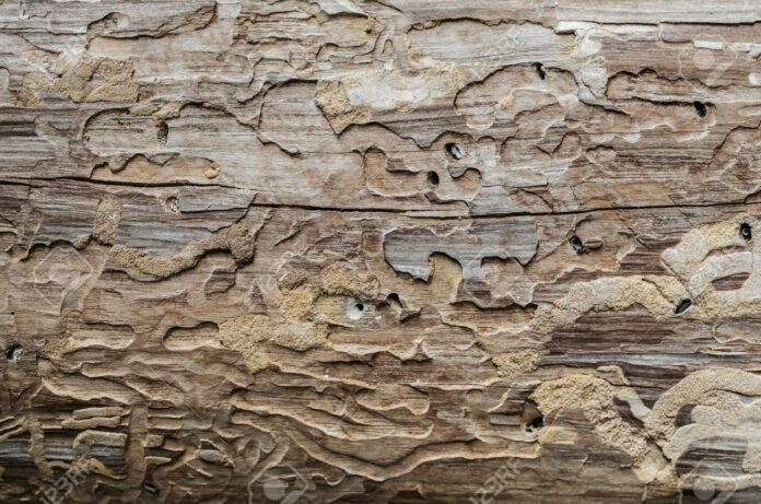How Often Should Your Home Be Treated For Termites