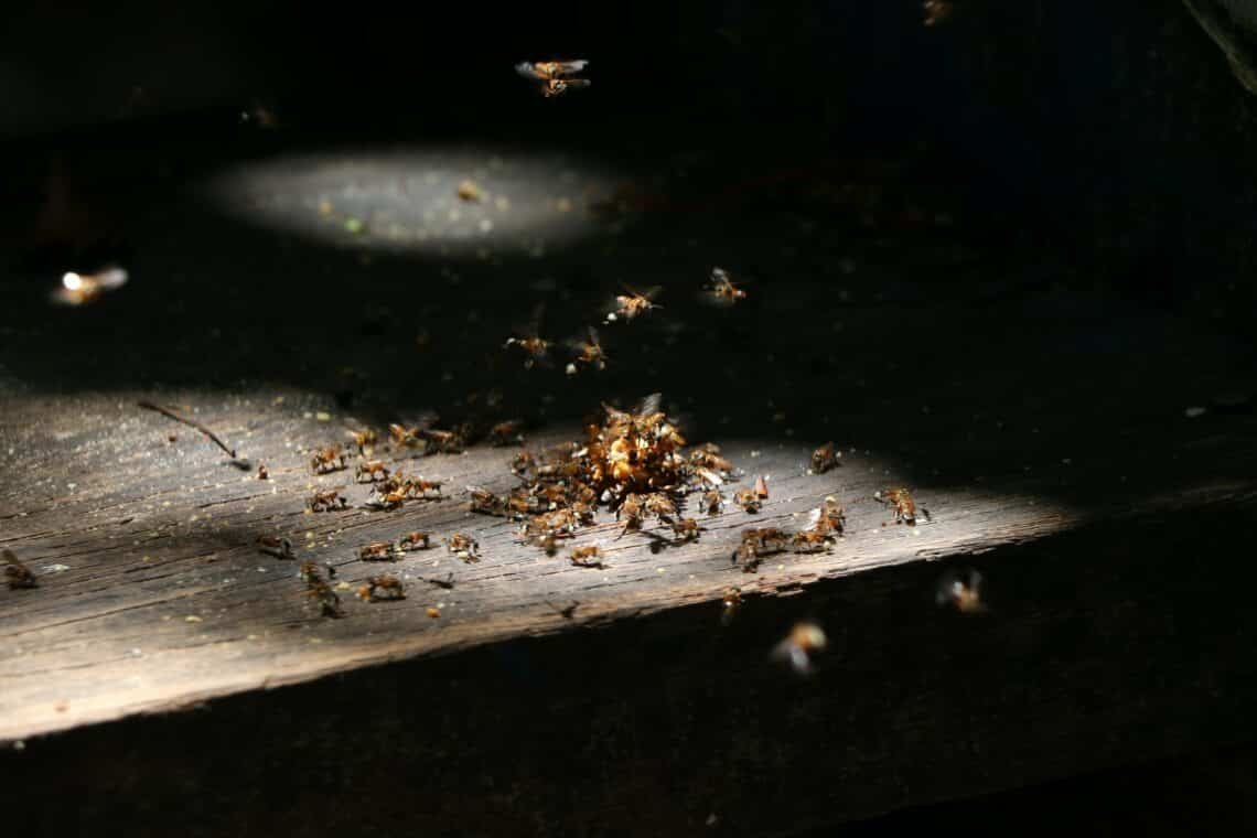 How often you should check for termites 3 1