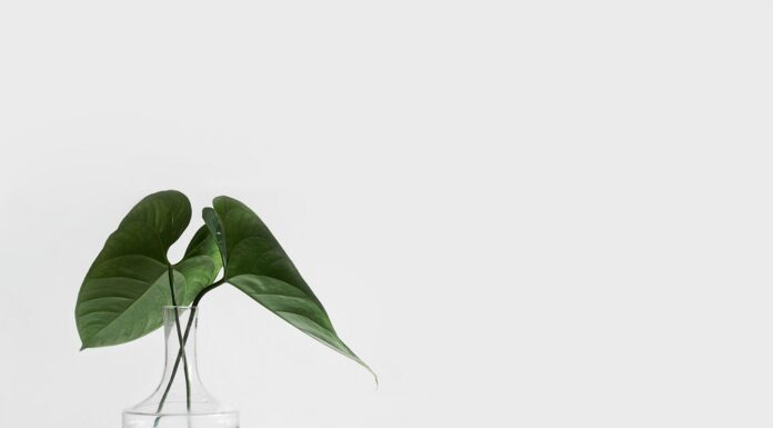 How Has Covid-19 Inspired People To Go Green Indoors