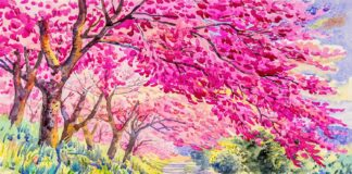 Painting pink color of wild himalayan cherry flower