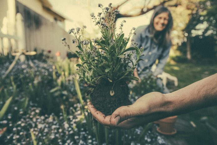 The Importance Of Gardening During The Pandemic