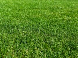 Green grass lawn in the garden, green flooring making concept, football pitch training or golf lawn. Green grass texture background, ground level view.Abstract natural background with selective focus
