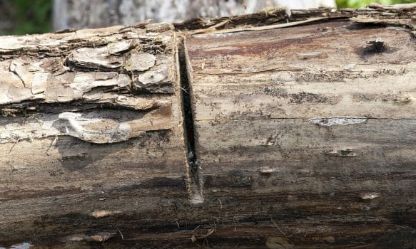 cut on a log - a small cut on the tree during its processing, focus on cutting, small dof