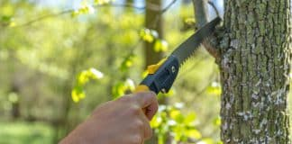 pruning a tree with a hand saw in the woods.