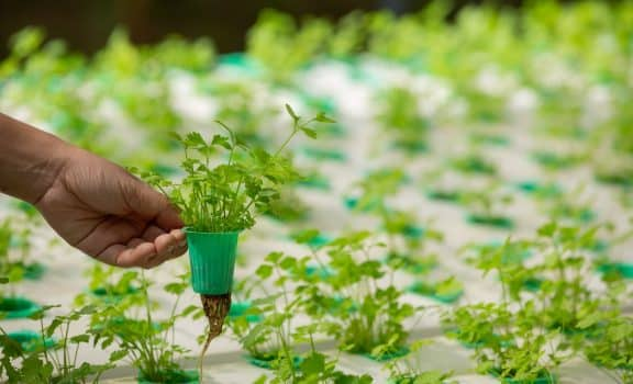 Hydroponics system, planting vegetables and herbs without using soil for health, modern food and agricultural design concepts.
