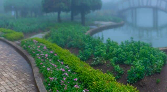 Landscape misty panorama , photographer taking pictures of foggy garden