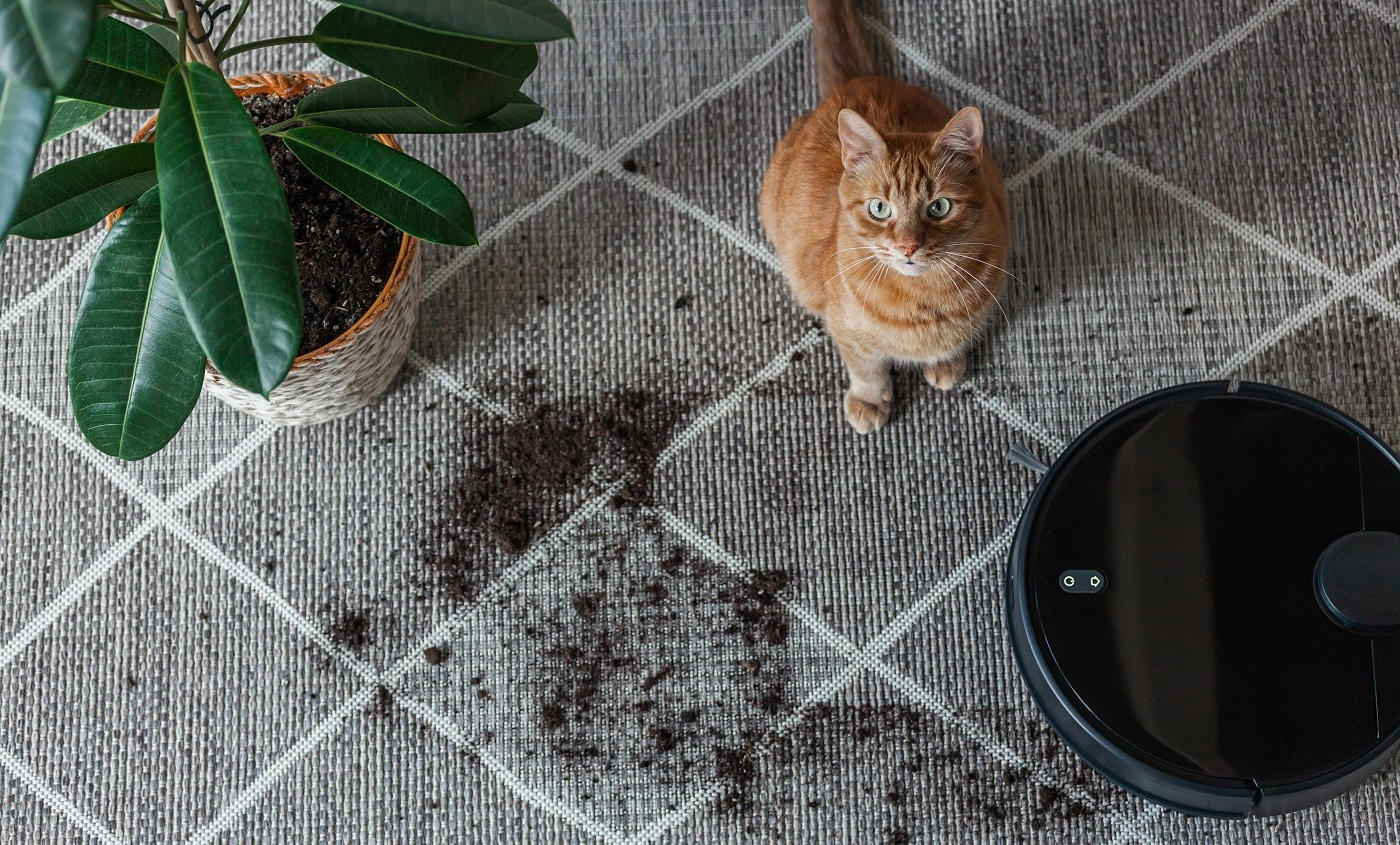 Robot vacuum cleaner cleaning dirty carpet and cat at home next to plant